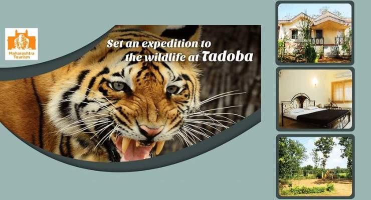 Tadoba Moharli India MTDC resort