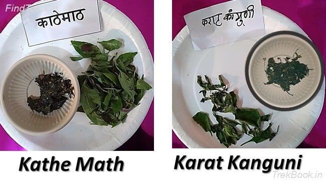 Kathe Math and Karat Kanguni - wild vegetables in india