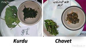 Kurdu and Chavet - wild vegetables in india Maharashtra