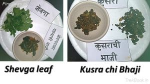 Shevga leaf and Kusra chi Bhaji - wild vegetables in india