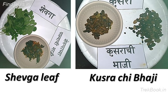 Shevga leaf and Kusra chi Bhaji - wild vegetables in india